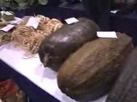 Giant Vegetable World Record Size