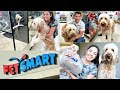 SHOPPING AT PETSMART WITH OUR GOLDENDOODLE PUPPY DUDE + HAUL!