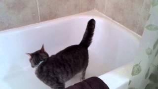 Cat Video Interweb
