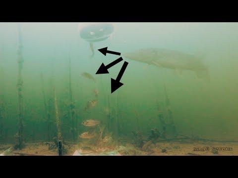 зимняя рыбалка на карпа - 2018-04-22 13:19:06