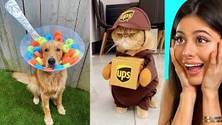 Easy DIY Halloween Costumes for animals