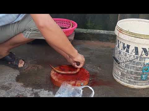 How to clean eels / ចាក់អន្ទង់😂