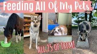 Feeding All 25 Of My Pets In One Video   Lockdown Day 32   Lilpetchannel