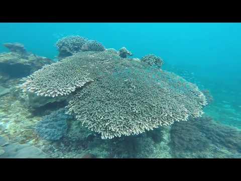 lost-in-bali:-scuba-diving-series:-lembongan,-bali,-indonesia