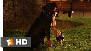 Legally Blonde 2 (8/11) Movie CLIP - Gay Dogs (2003) HD | Movieclips
