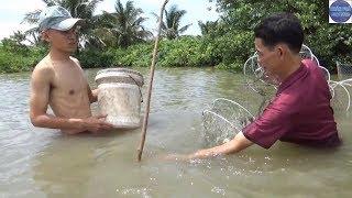 Vào vuông dở lú tôm sú luộc nước dừa tươi/shrimp