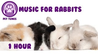 Music for Rabbits! Music to Relax Rabbits, Happy Bunny Music!