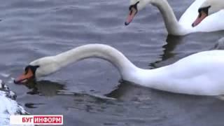 2015-01-29 г. Брест. Наказание за жестокое обращение с животными. Телекомпания  Буг-ТВ.