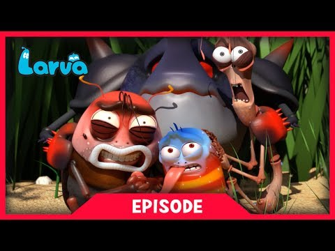 LARVA - INSECT KILLER MINI SERIES | Larva Cartoon | Cartoons For Children | LARVA Official
