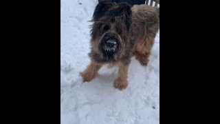 LOVELY BRIARD DOG MOMENTS