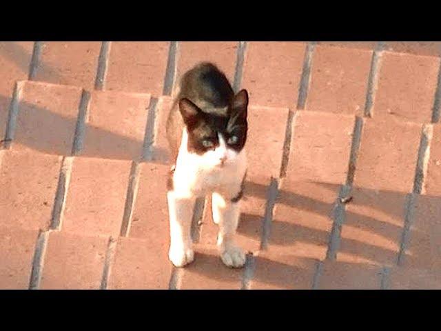 驚き!喧嘩を止めてと言えば従う猫 こんな離れている距離で!番外編