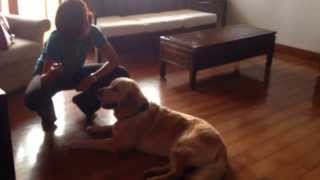 Binaisha | Certified Dog Trainer | Mumbai - Training Franky (day 4)