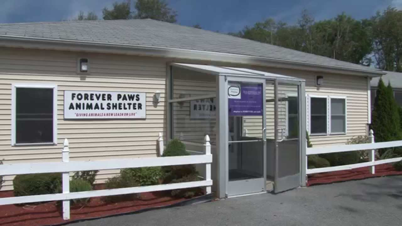 Tour of the Forever Paws Animal Shelter