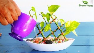 Money plant in Lucky bamboo Style-Money plant Growing Idea-Money plant Growing Style//GREEN PLANTS