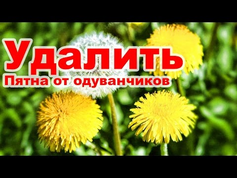 Удалить пятна от одуванчиков / How to remove stains from dandelions