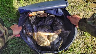 Норма вылова за час! Ведро рыбы за утро! Ловля крупного карася на фидер. Рыбалка 2020