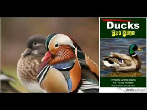 Ducks For Kids – Amazing Animal Books For Young Readers – Kindle ...