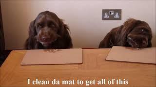Doggy Taste test