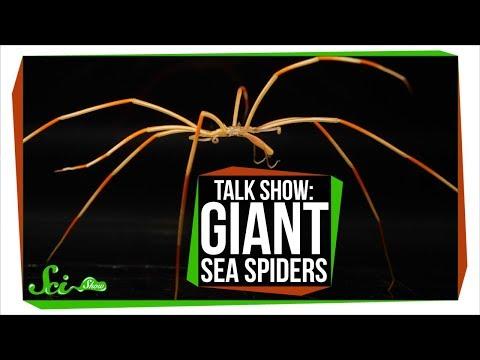 Giant Antarctic Sea Spiders   SciShow Talk Show