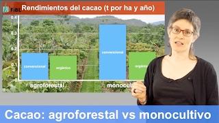 Rendimientos de cacao: sistemas agroforestales vs monocultivos - orgánico vs convencional