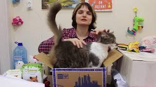 Умная кошка распаковывает посылки от подписчиков!
