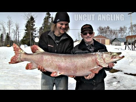 First Musky EVER from Lake Winnipeg?? - Uncut Angling - April 10, 2014