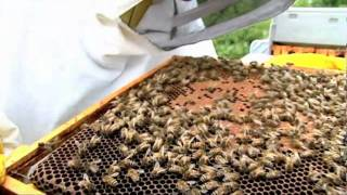 Expert beekeeping tips with Robin Dartington