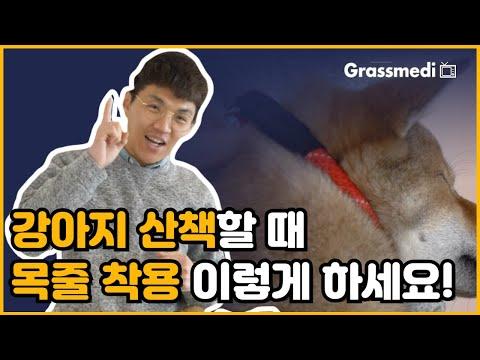 강아지 산책 나갈때 목줄 이렇게 하세요! 올바른 리드줄 착용법