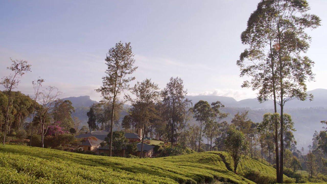 Ceylon Tea Trails | Official Video