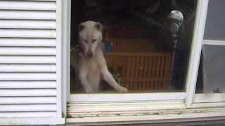 YDR,犬、保護、福島、警戒区域、