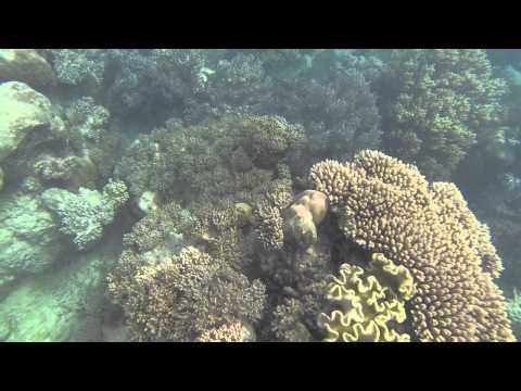 Our Trip To Cairns (Gt. Barrier Reef/Asia Pacific TCC)