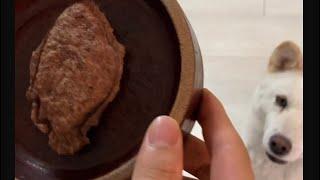와플기계(붕어빵)로 오리고기 눌러서 강아지 특식주는 영…