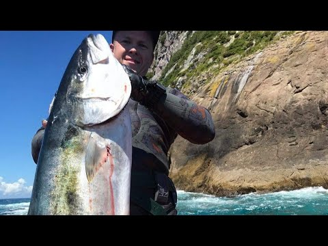 Spearfishing NZ | Big Fish & Lobster | Swimming With Dolphins!