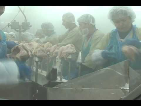 Inside a US Poultry Processing Plant