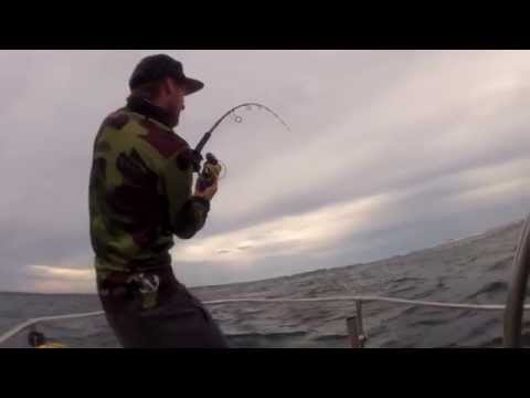 Hooked n' Hunted Popping Tonga