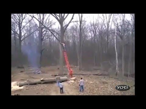 Stupid tree cutting mistakes (Prt 1)