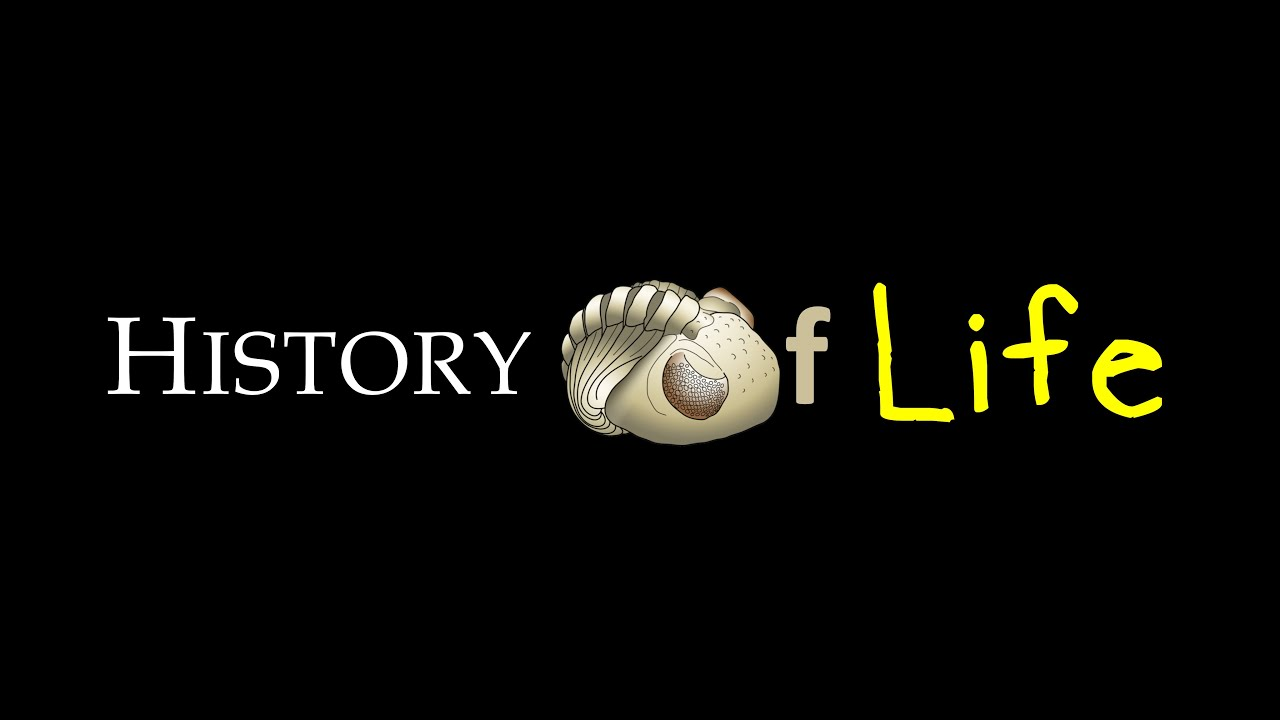 History of Life project - film montage (2019)