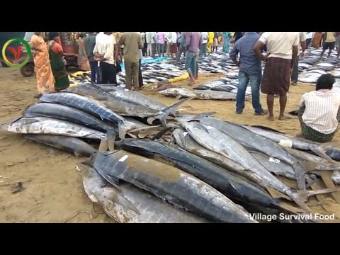 World BIGGEST Tuna Fishmarket | 500 pounds of Fishes in Fish Market Amazing