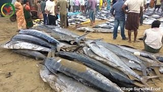 World BIGGEST Tuna Fishmarket | 500 pounds of Fishes in Fish Market Amazing