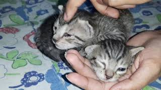 I found two abandoned kitties who were alone to die ☹