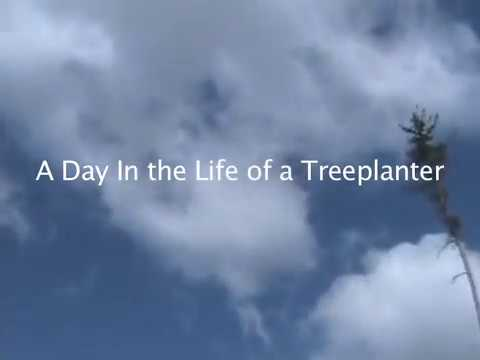 A Day In The Life Of A Treeplanter - Part 1