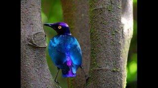 As 15 aves mais belas do Brasil!!!!!!