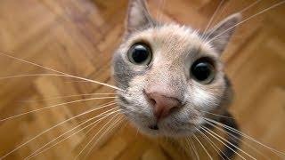 Нельзя смотреть без слез  Приколы про кошек