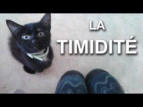 LA TIMIDITÉ - PAROLE DE CHAT