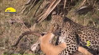 Gambar cover Amazing!! Animal Saves Another Animal   Animal Heroes 2016 HD   YouTube