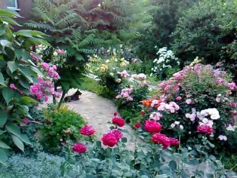Moj vrt,pocetak juna 2010. godine.Arandjelovac,Srbija.mp4