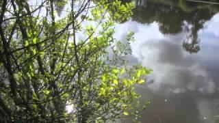 W. A. Mozart - Die Verschweigung - Güra/Berner