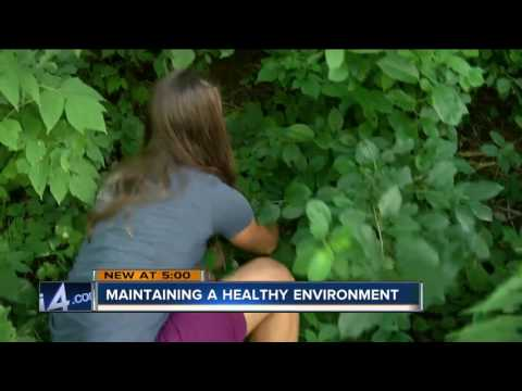 Urban Ecology Center works to learn more about animal environment