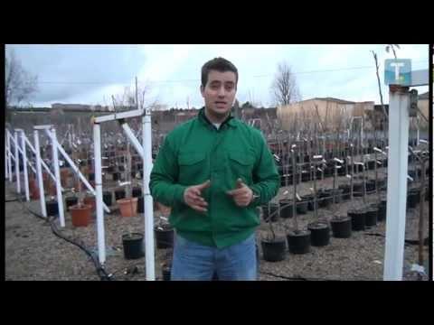 El jard n en tus manos rboles frutales youtube for Arboles frutales para jardin