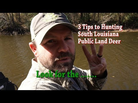 3 Tips To Hunting South Louisiana's Public Land Deer